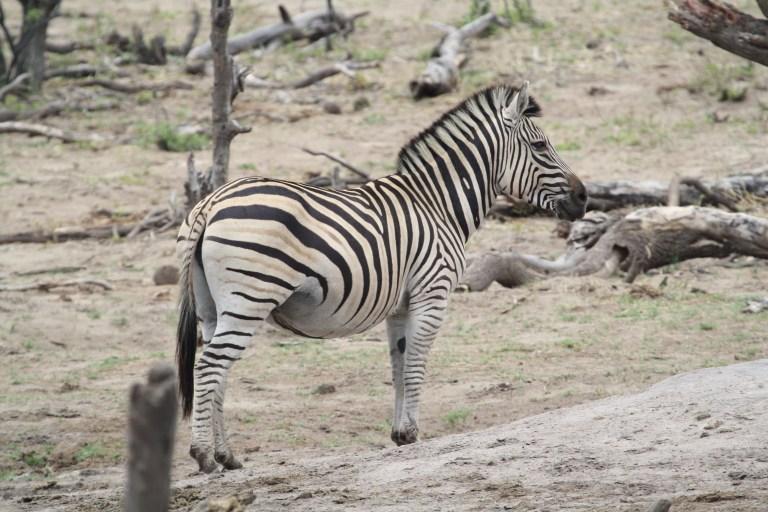 hwange zimbabwe (12)