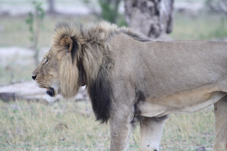 hwange zimbabwe (27)