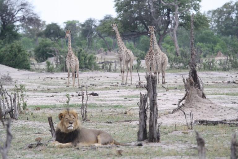 hwange zimbabwe (28)