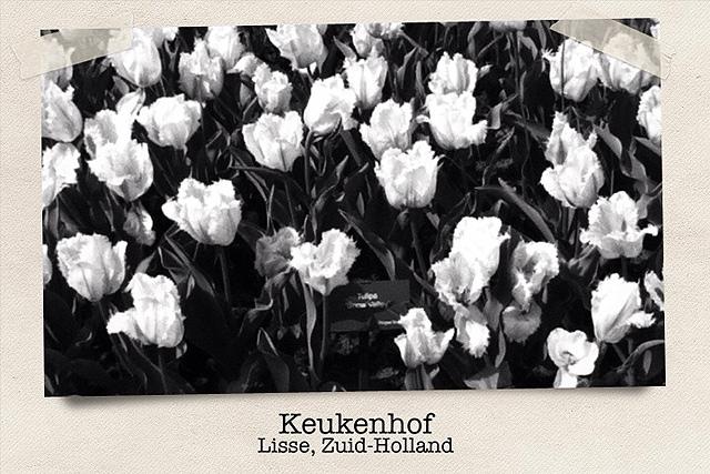 tuliptrip-dia-1-640