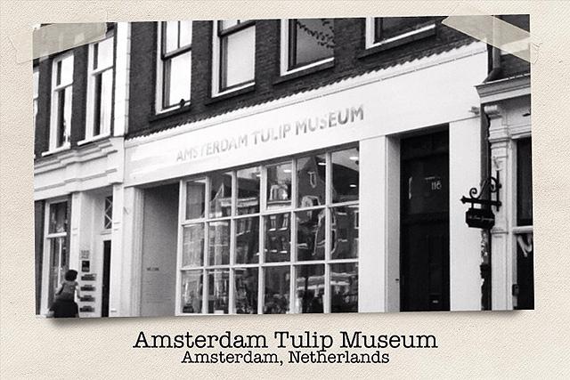tuliptrip-dia-2-640