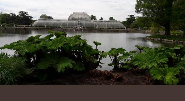 Guia para visitar los jardines botánicos de Kew en Londres
