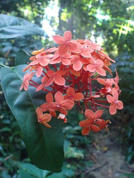 Flower in Khaolak-Lumru National Park