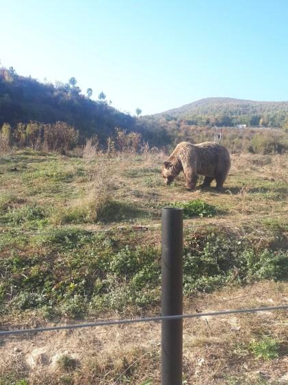 bear sanctuary prishtina