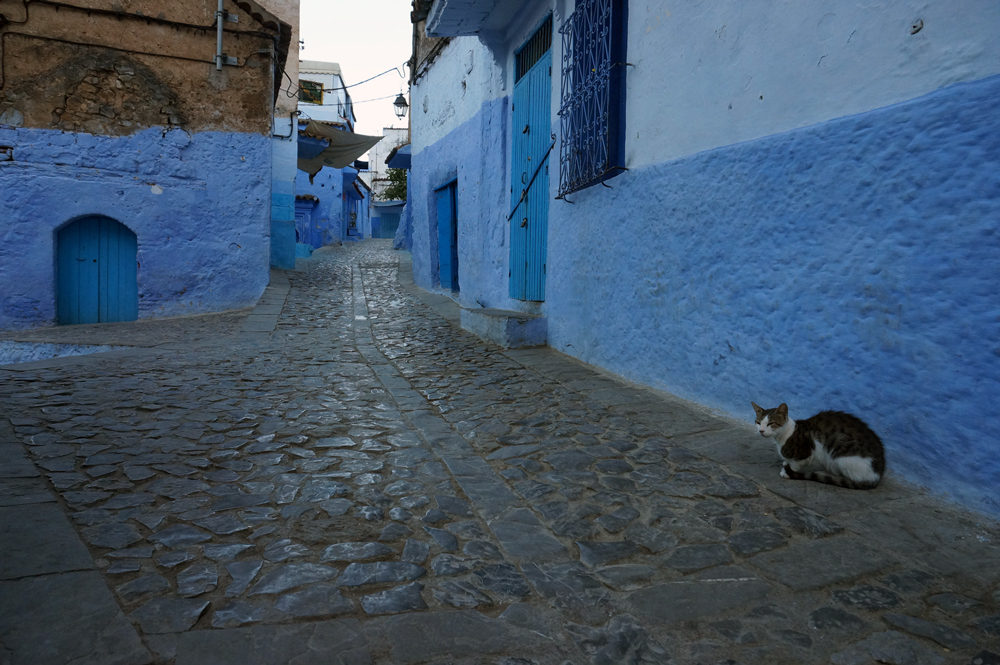 chefchaouen or known as the blue city. A great place for photos... especially of cats!