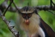 Tafi Atome ist v.a. bekannt fuer sein kleines Affenschutzgebiet