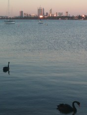 Perth with real live Black Swans!