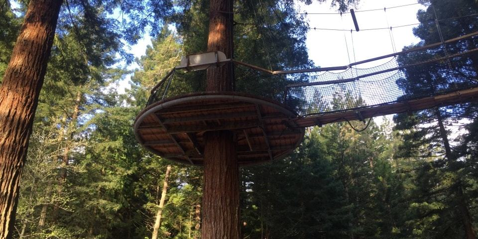 Rotorua redwood forest tree top walk night lights trubridge lights