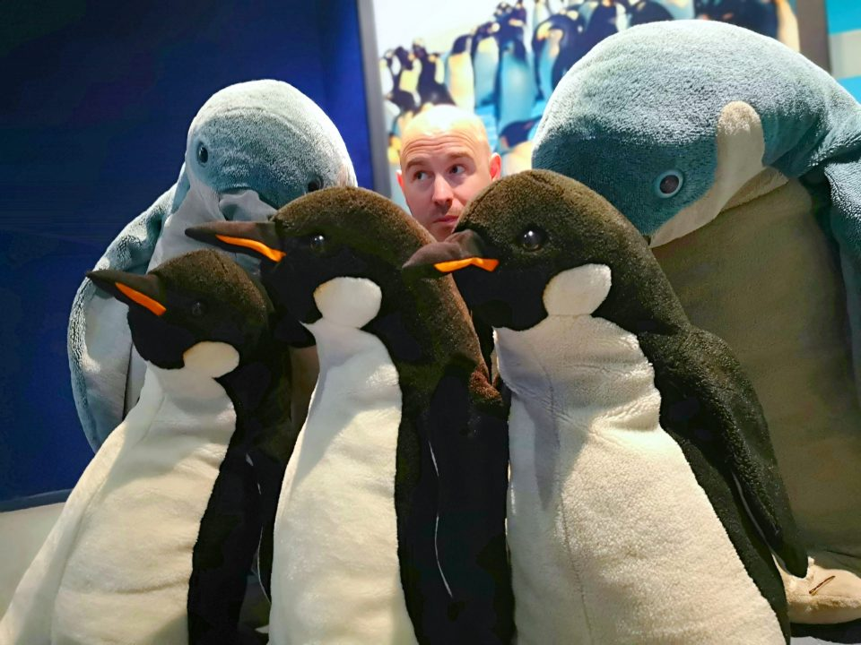 stuffed penguin teddy bears international antarctic centre