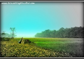Landscape Photography: Dry Winter Pastures After Harvest