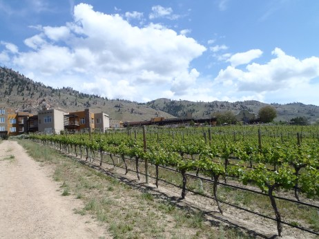 The Spirit Ridge Resort in Osoyoos - vineyard.