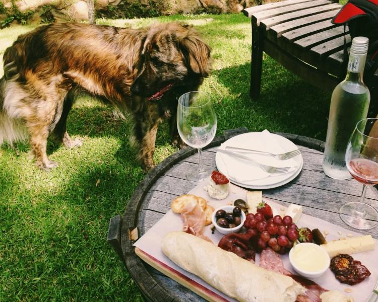 cape-town-constantia-winelands-travel-blog-solo-female