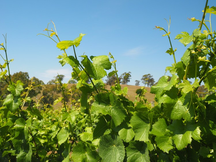 adelaide-hills-vineyard-winery