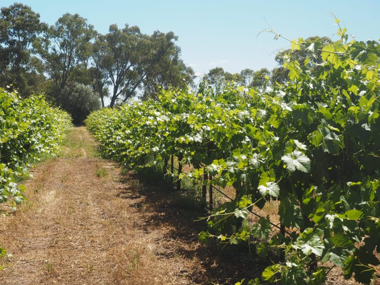 maggie-beer-barossa-south-australia