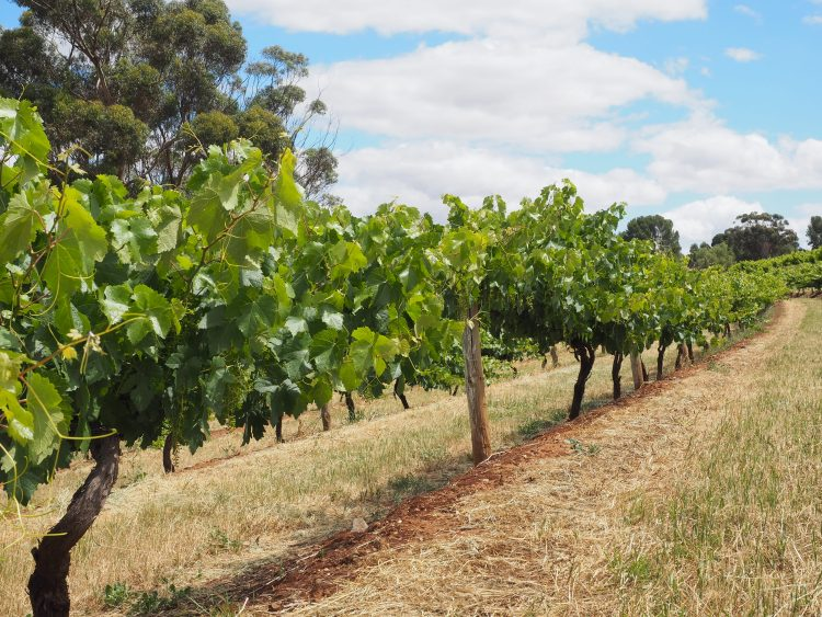 seppeltsfield-barossa-south-australia