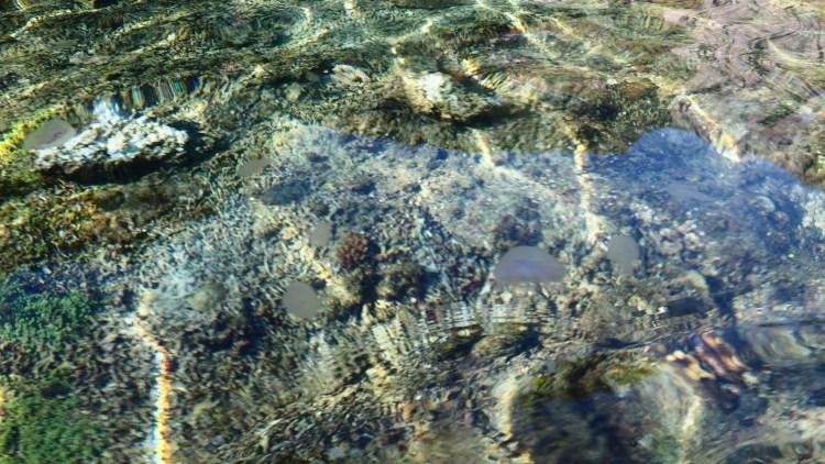 el-nido-small-lagoon