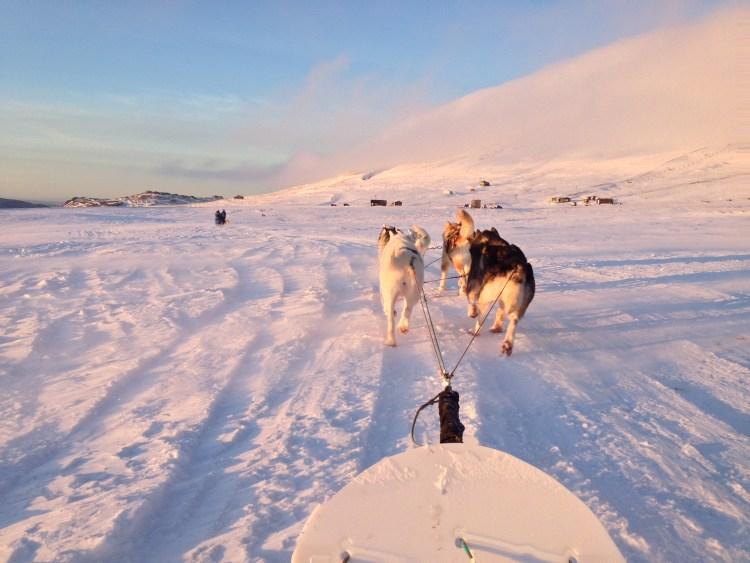iceland-dog-sledding-reykjavik