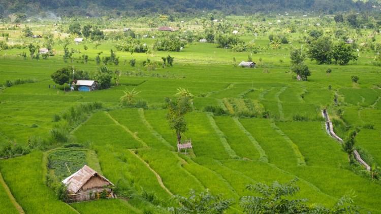 east-bali-rice-field