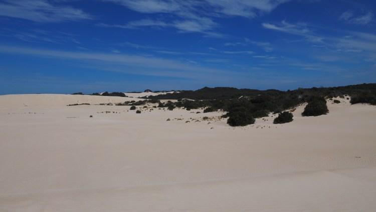 little-sahara-australia-kangaroo-island