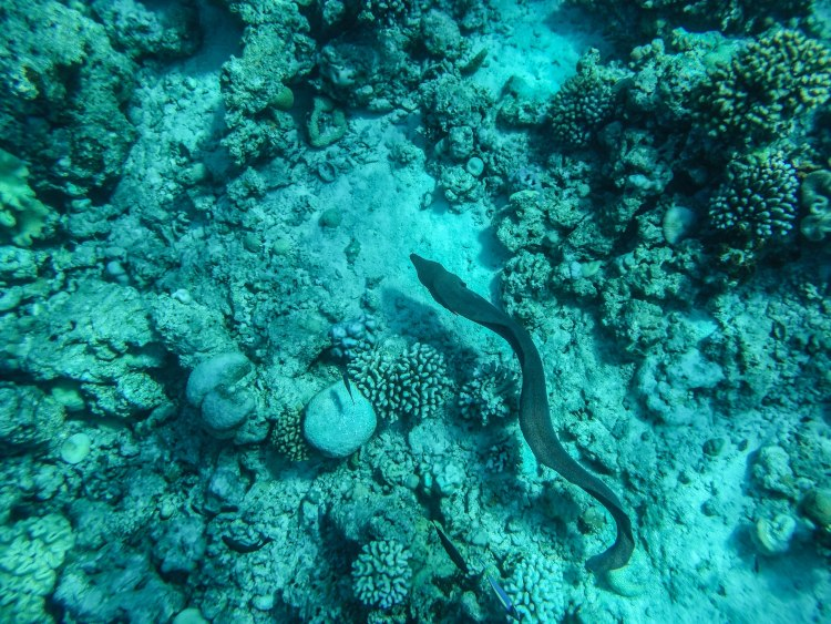 maldives-travel-blog-2017