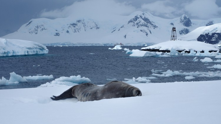 stony-point-antarctica-travel-blog-solo-oceanwide-expeditons