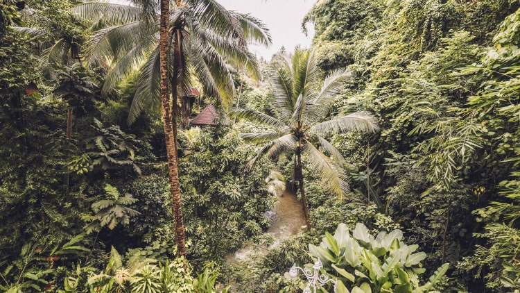 ubud-bali-indonesia-travel-blog-travelling-the-world-solo