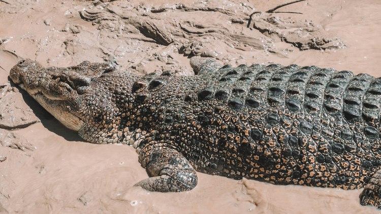 adelaide-river-saltwater-crocodile-jumping-crocs-travel-blog-darwin-northern-territory-australia-travelling-the-world-solo