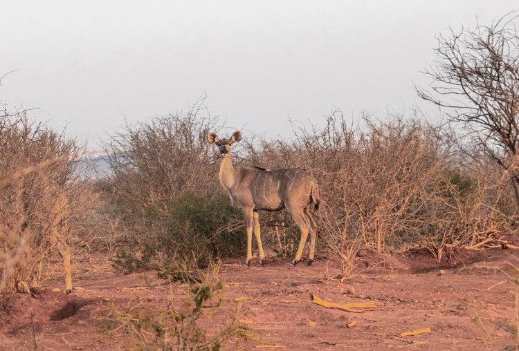 jacis-safari-travel-blog-lodge-south-africa-travelling-the-world-solo-madikwe