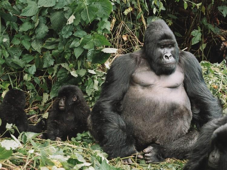 Virunga-Gorillas-Travel-Blog-National-Park-Democratic-Republic-of-Congo-DRC
