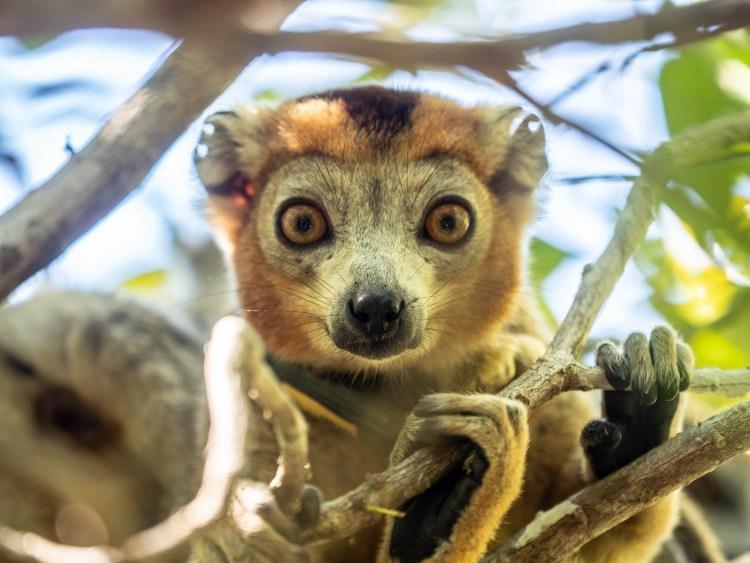 Time-Tide-Miavana-Travel-Blog-Nosy-Ankao-Madagascar-Blue-Safari-Luxury