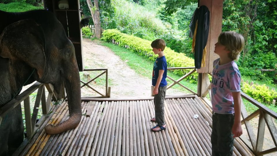 Olifantenverblijf