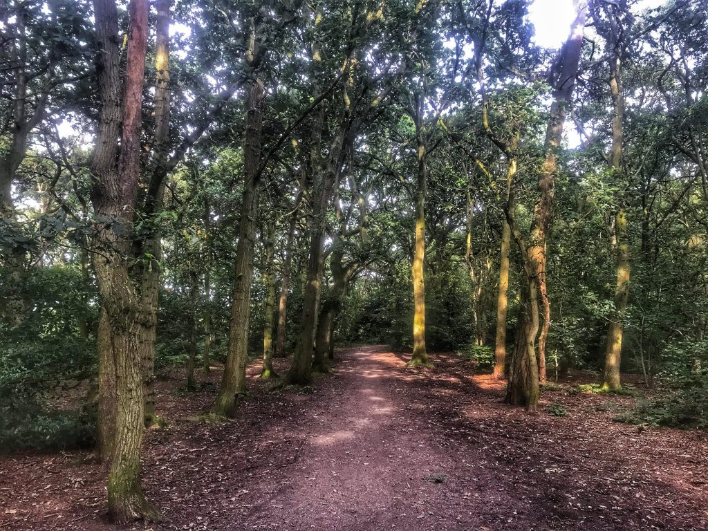 Sun shining through the trees onto the path through Ruff Wood Ormskirk