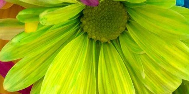 Beautiful and scintillating green flower.