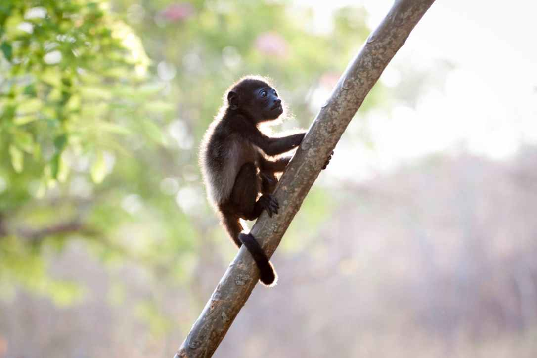 closeup photo of brown baby monkey