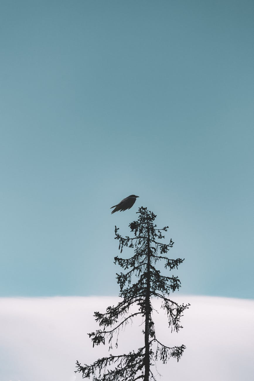 flight of black bird above tree