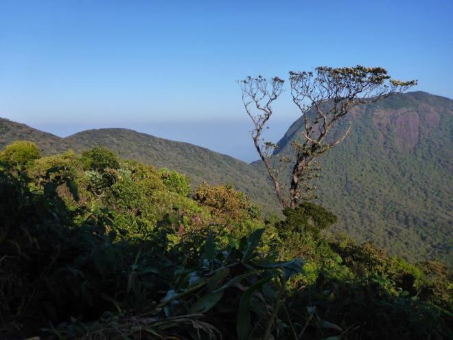 View of green clad mountains from Adam's Peak