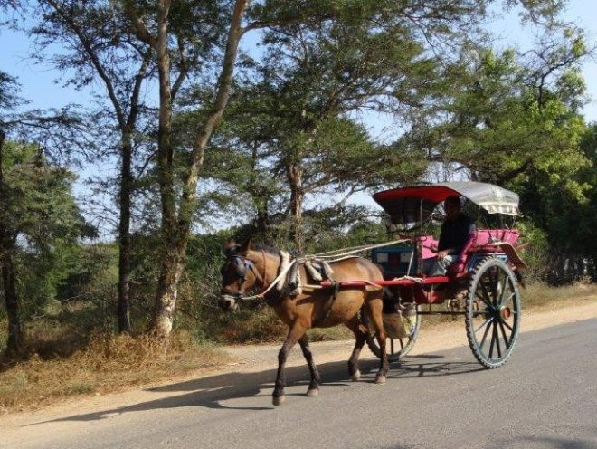 Horse and carrage is common transport in Bagan, Myanmar