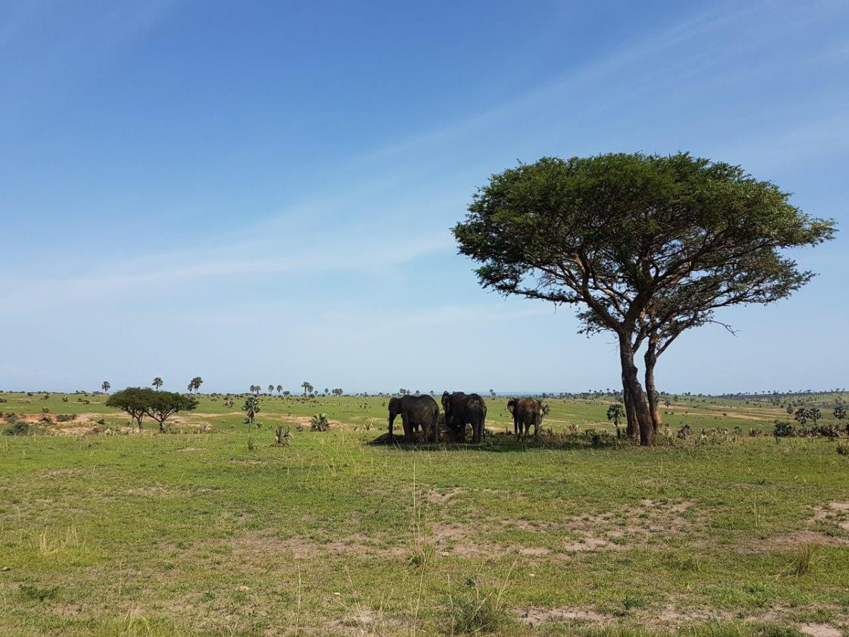 Elephants resting in thge shade. Murchison Falls National Park in Uganda Africa