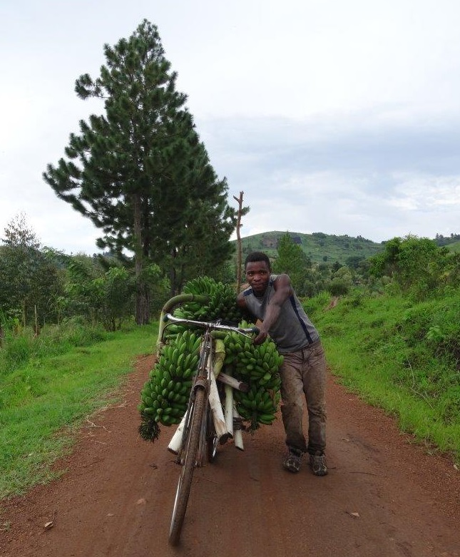 James is on his way to the market with his bike loaded with Matoke. Uganda