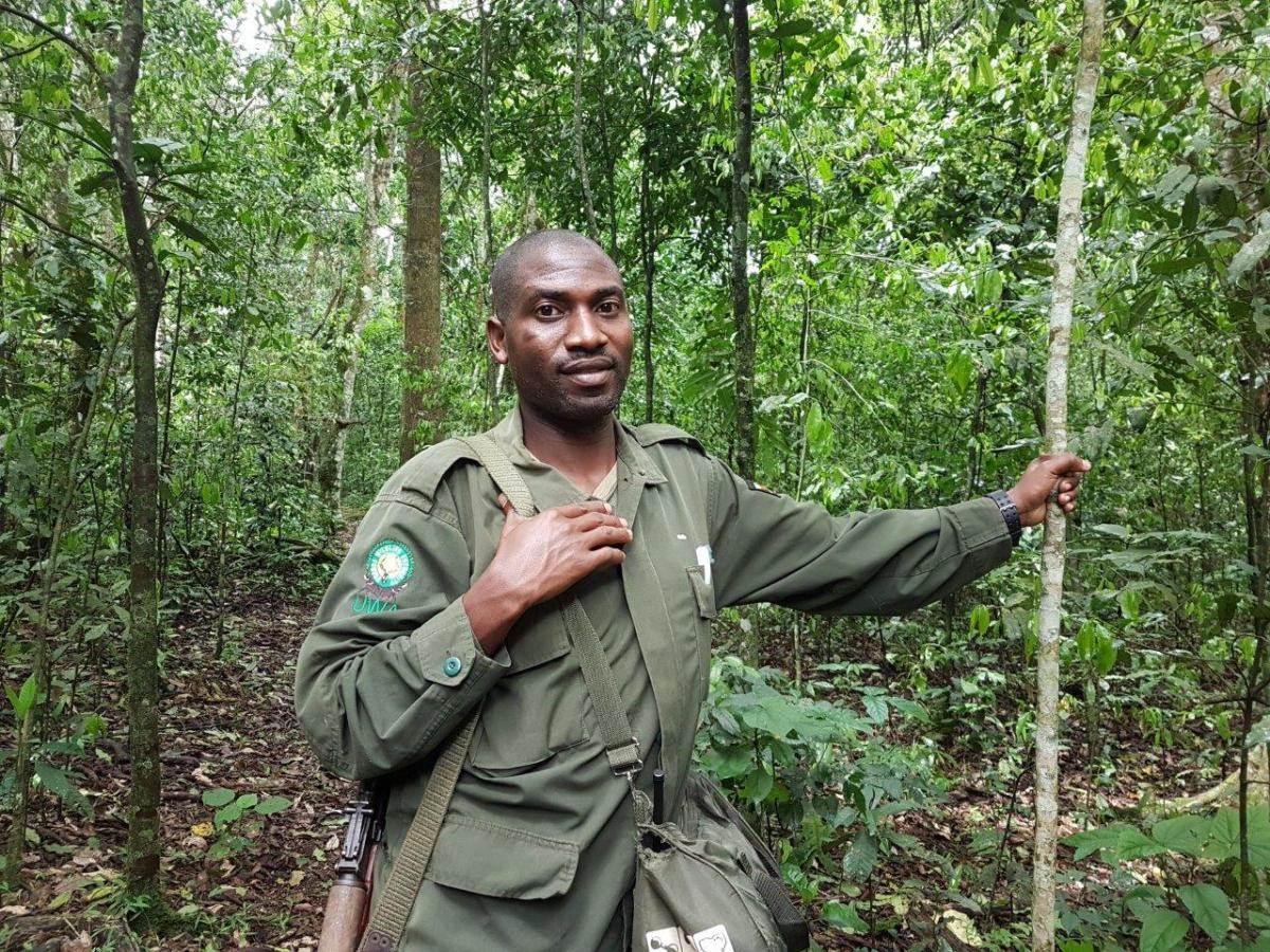 Our knowledgeable guide Africano (33). Chimp Tracking in Kibale Forest National Park, Uganda.