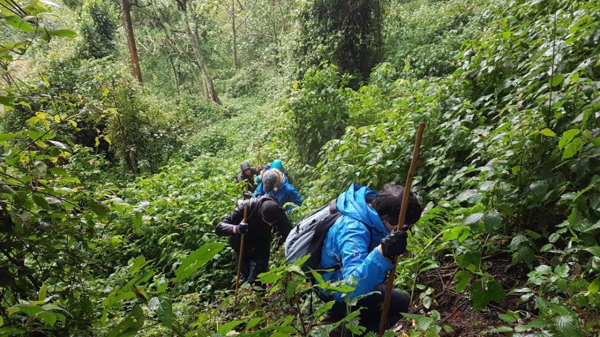 Steep climbs. Gorilla trekking in Bwindi. Ruhija, Uganda.