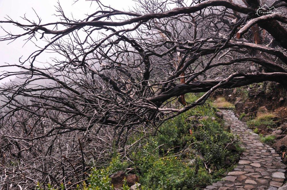 Madeira_Travellissima-1358