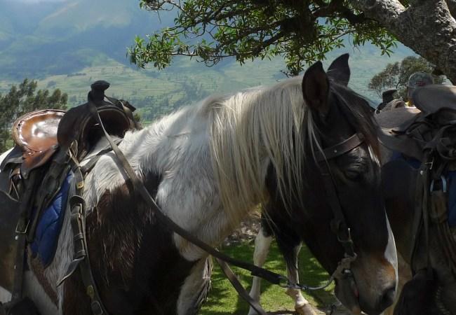 P1010315 - Horse Resting Under Tree on Mtn