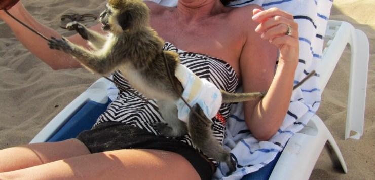 monkey ewww