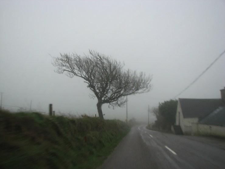 1434 More Rain & Wind~