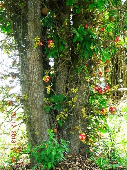 奇异的野生兰花