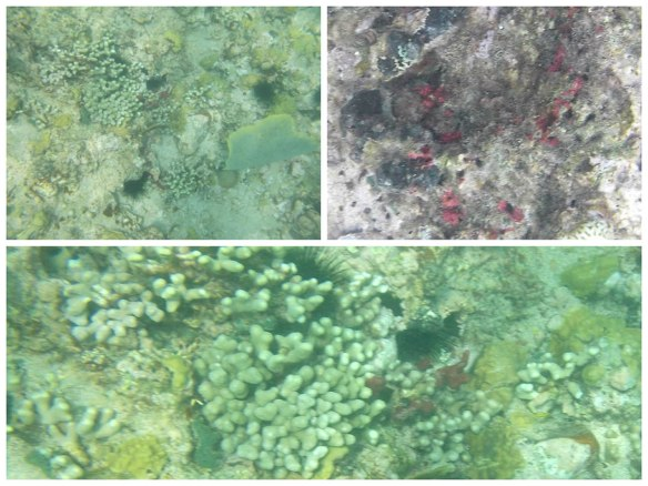 形状各异的硬珊瑚