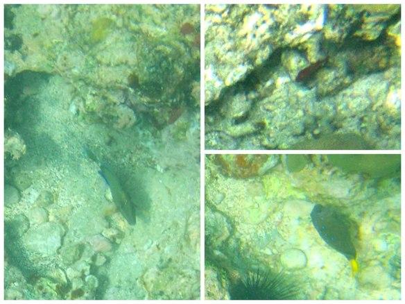 红鱼注视下两绿鱼对话