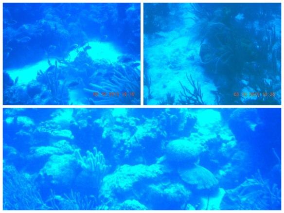 美丽珊瑚群