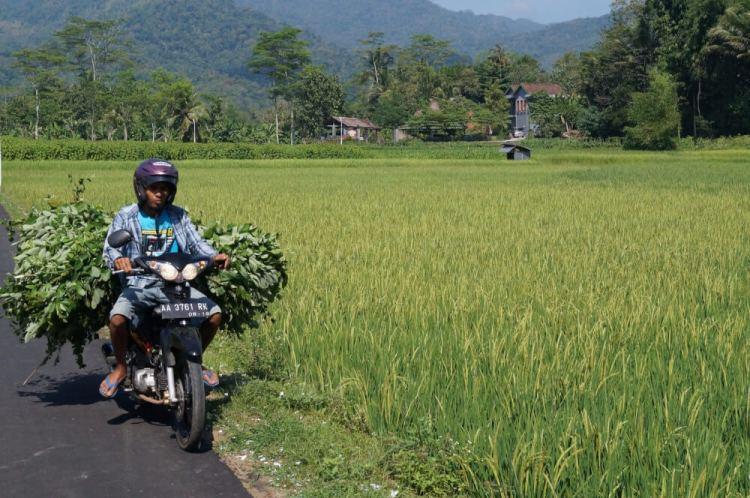 Tips indonesiè
